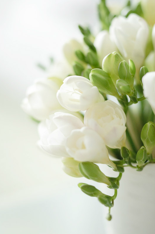 erikas vintage gathering wedding flowers freesia one of my personal favourites beautiful smells divine and so elegant available from january onwards mightylinksfo