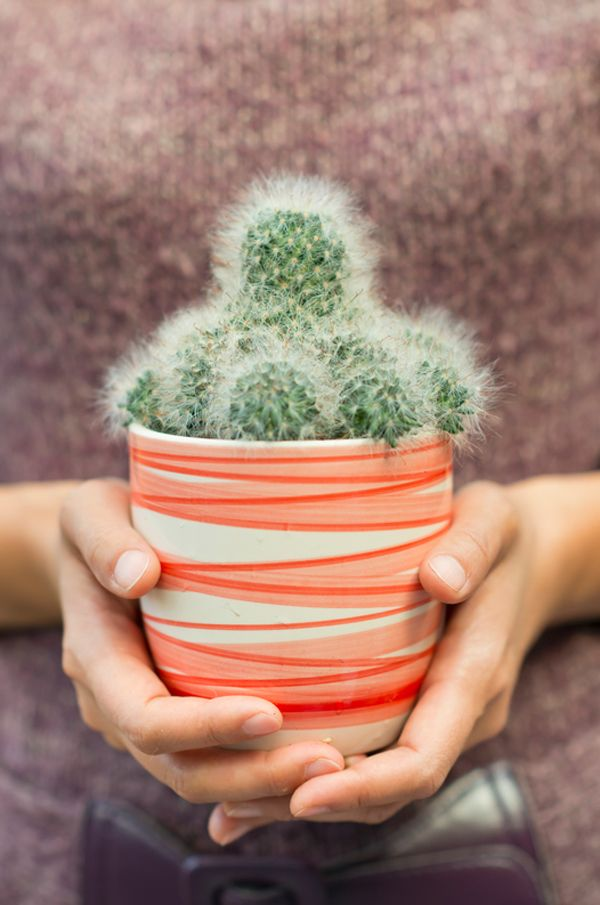 10 Great Types Of Cactus To Gift Cactus Types Cactus Plants