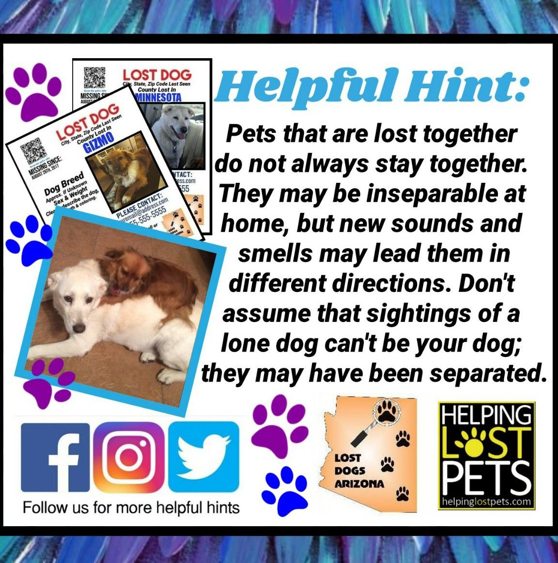 Nationalbestfriendday Remember That Dogs Lost Together Do Not Always Get Found Together Please Check Out Any D Losing A Dog National Best Friend Day Dog Safe