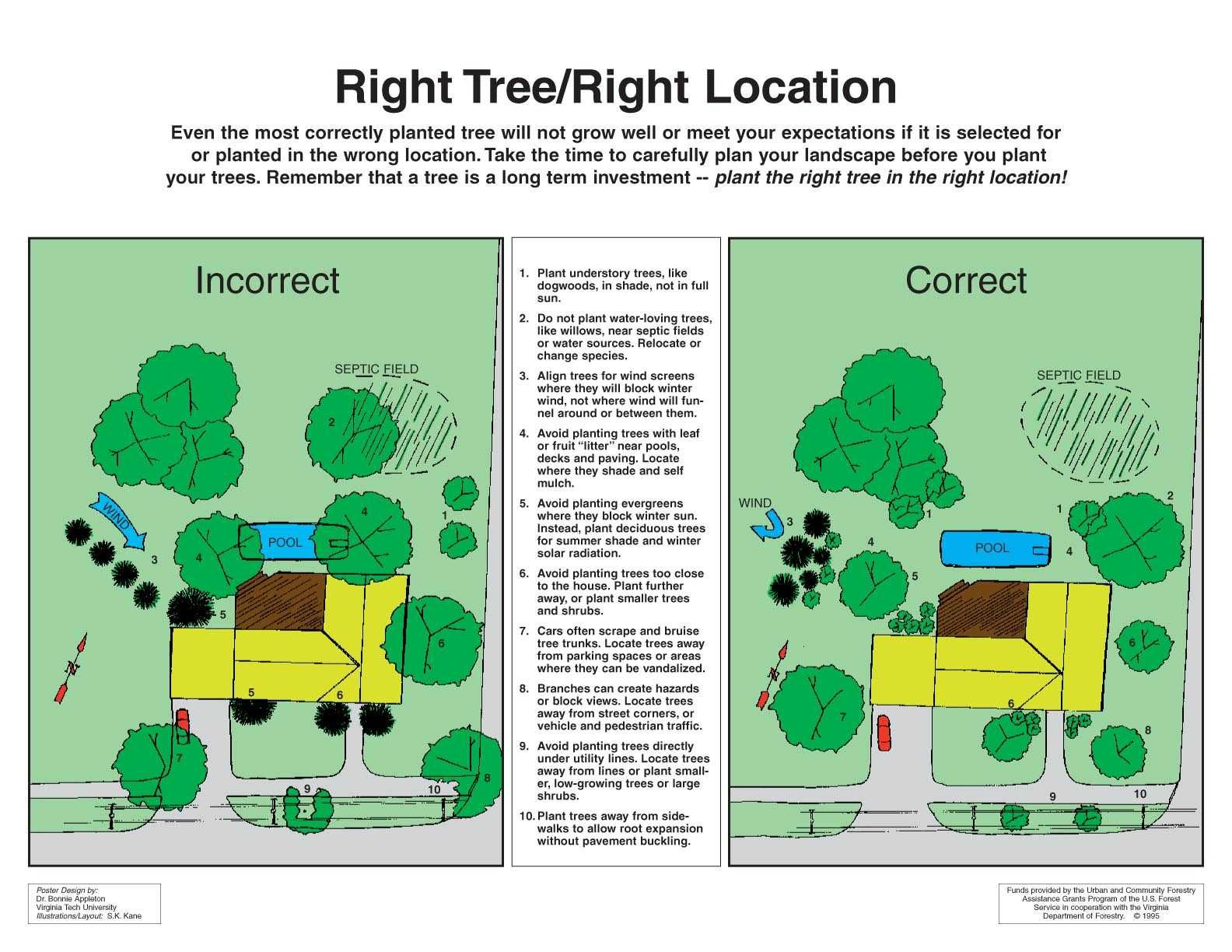 Great Tree Planting And Care Information Trees To Plant Tree Plan Garden Landscape Design