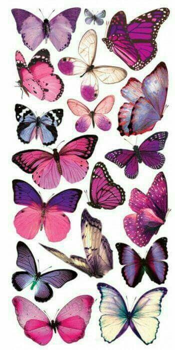 Butterflies – Butterfly