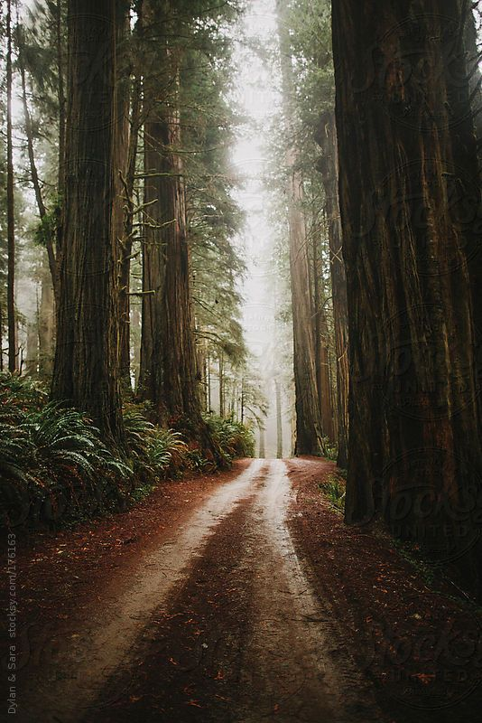 Image result for redwood path free images