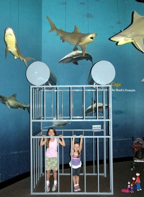 Oklahoma Aquarium in Tulsa is one of the best aquariums in ...