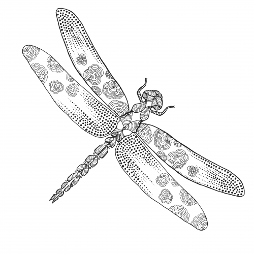 Free Dragonfly Adult Coloring Page | Pinterest | Adult coloring ...