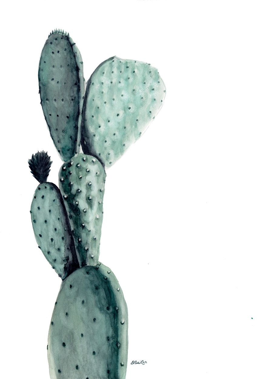 Opuntia Original Watercolor | Esther BeLer Wodrich