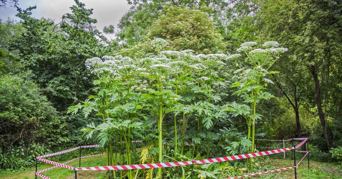 Die 10 Gefahrlichsten Giftpflanzen Im Garten Giftpflanzen Pflanzen Giftige Pflanzen