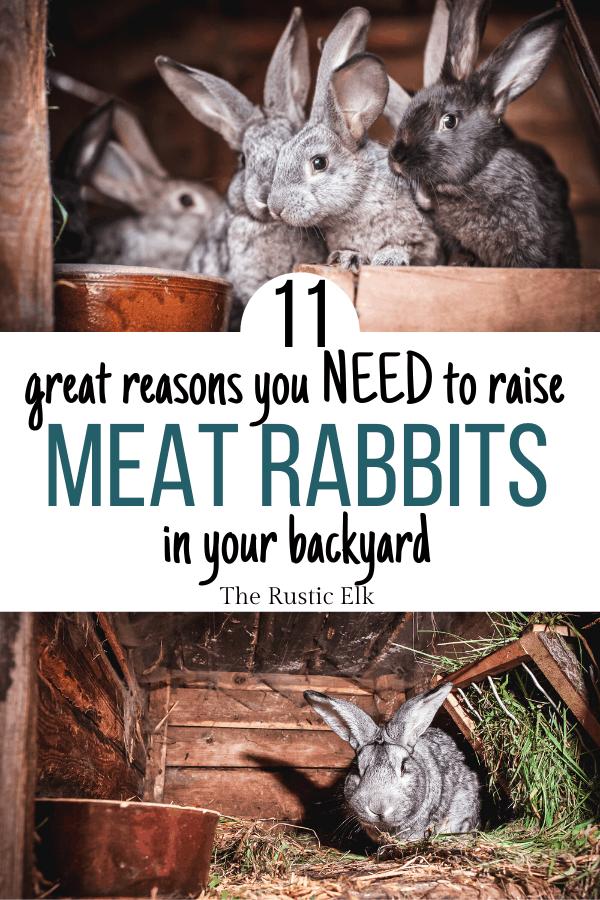 11 Reasons You Need Backyard Meat Rabbits   Meat rabbits ...