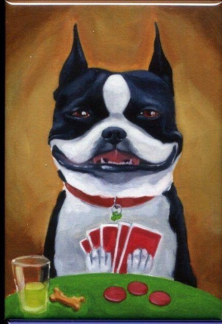 Boston terrier poker face LOL