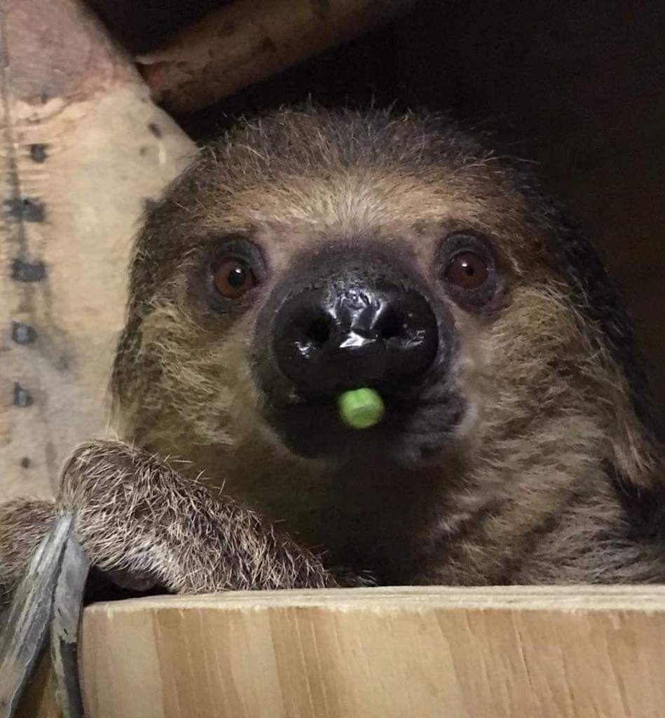 There's a retirement home for sloths in Wales, and it's