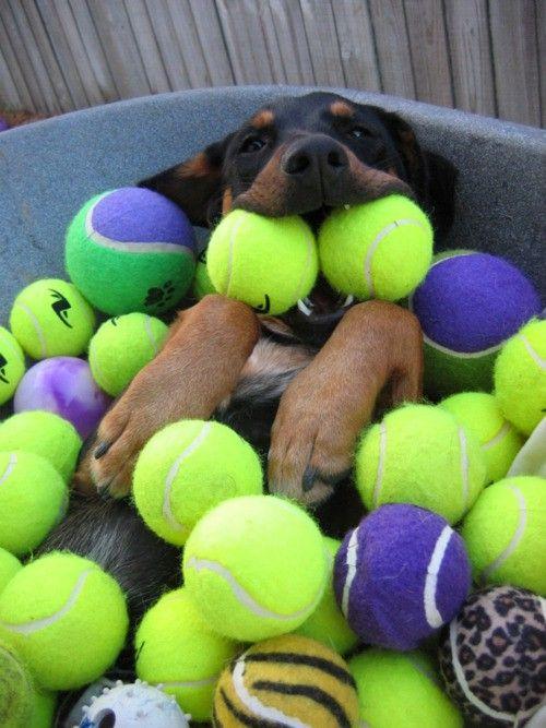Soy el amo de las pelotas :D Mías, todas míaass #perro #divertido #gracioso