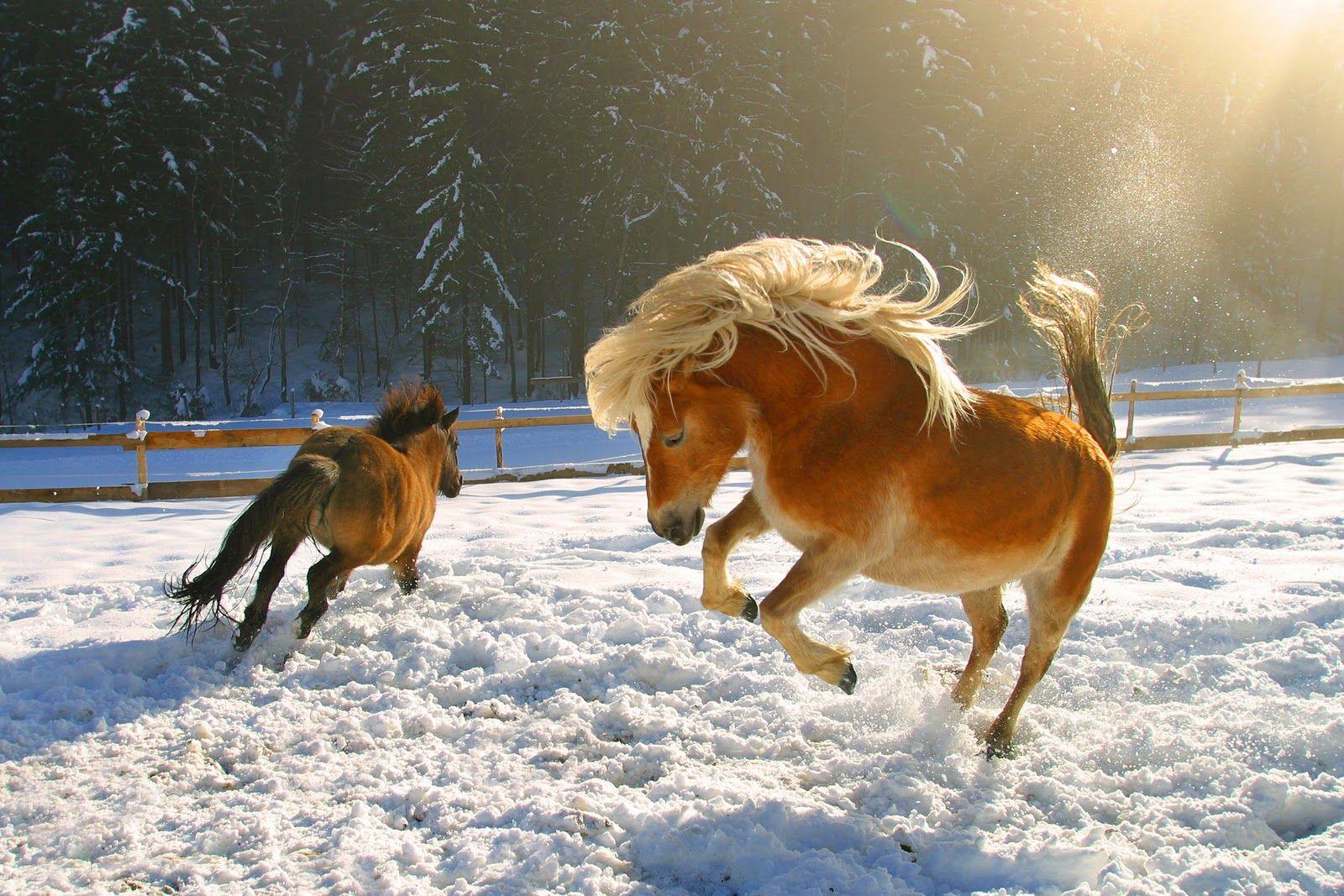 Ostern Gedichte Lustig Kurz Schnee Gedichte Lustig Pferde