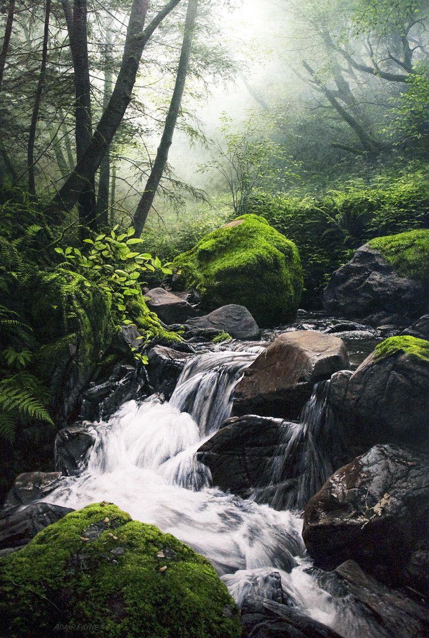 A solas con la naturaleza. Artista Adair Payne ...