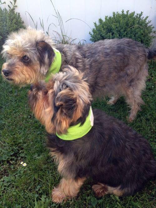 Kühlhalsband Für Hunde