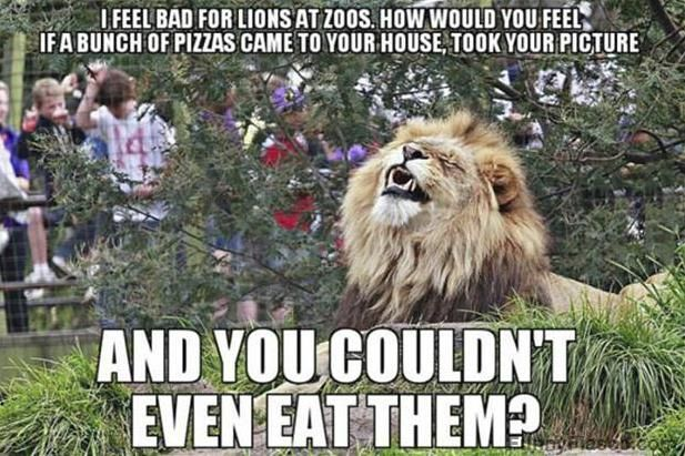 Funny Zoo Memes : Imagine yourself in a zoo animal humour funny images and zoos