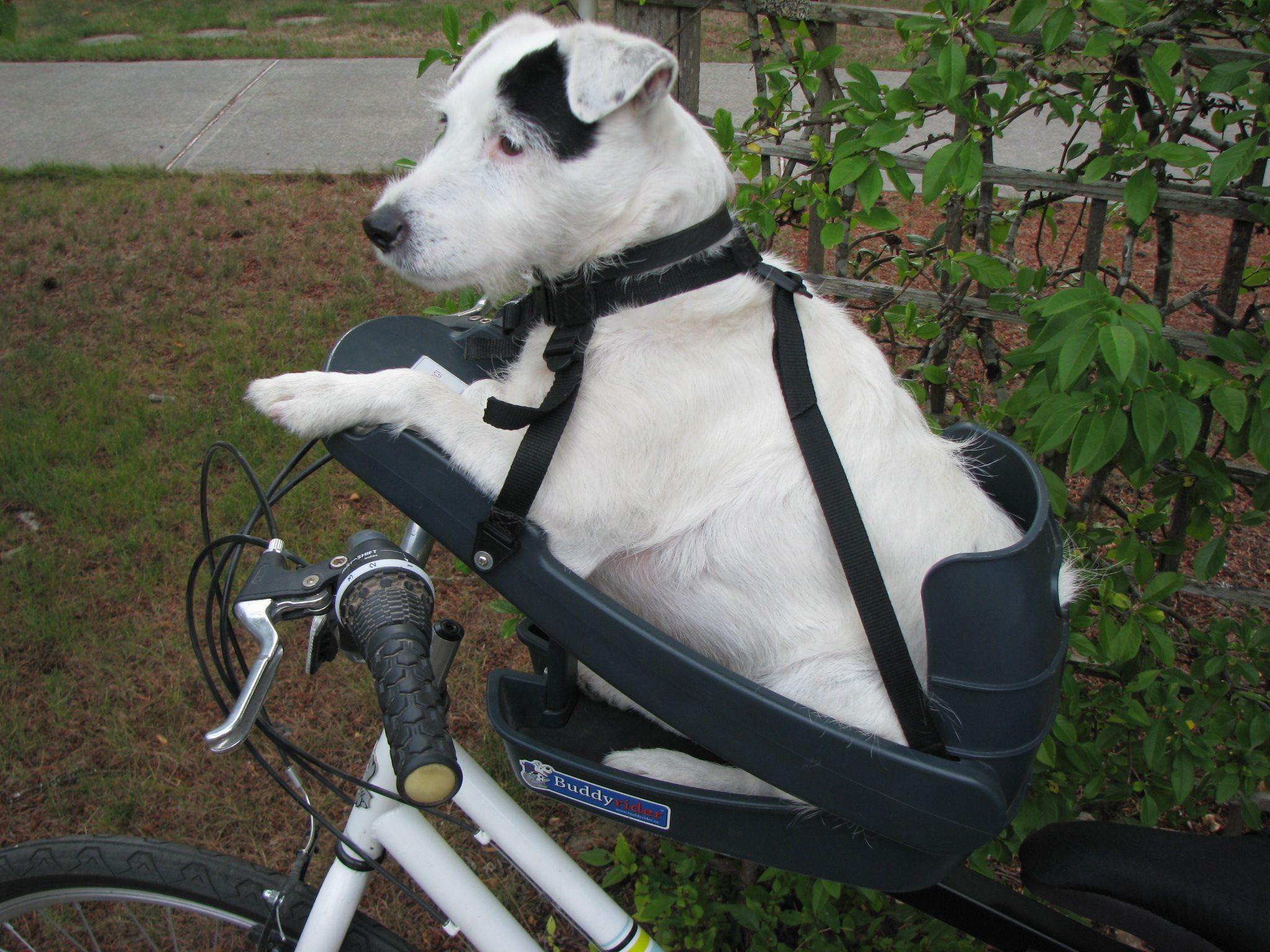 Puppy delivery service canada