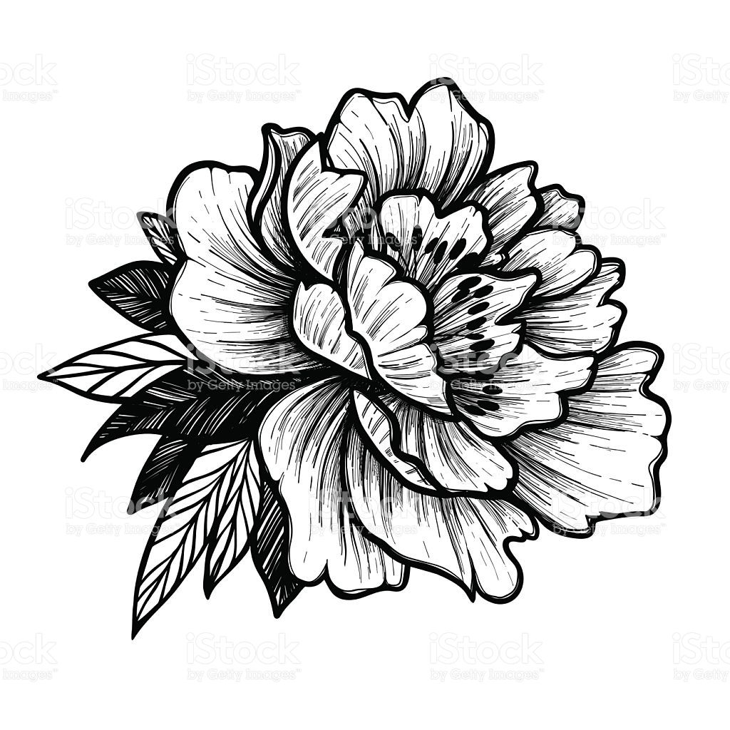 Image Result For Peony Tattoo Vector Floral Tattoo Flower