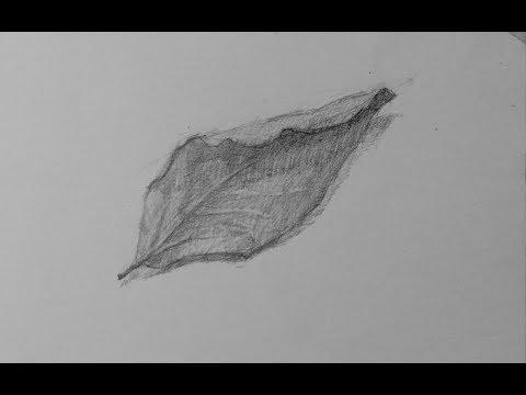 تعليم رسم رسم ورق شجر اقلام رصاص Mr Fine Artist تعليم الرسم Youtube Art
