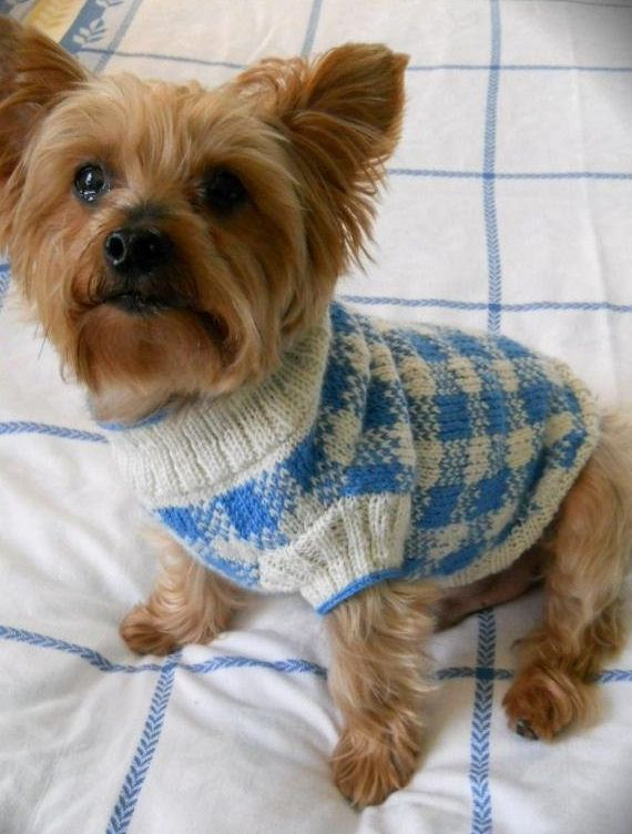 Knitting Pattern For Sunday Picnic Gingham Check Dog Sweater