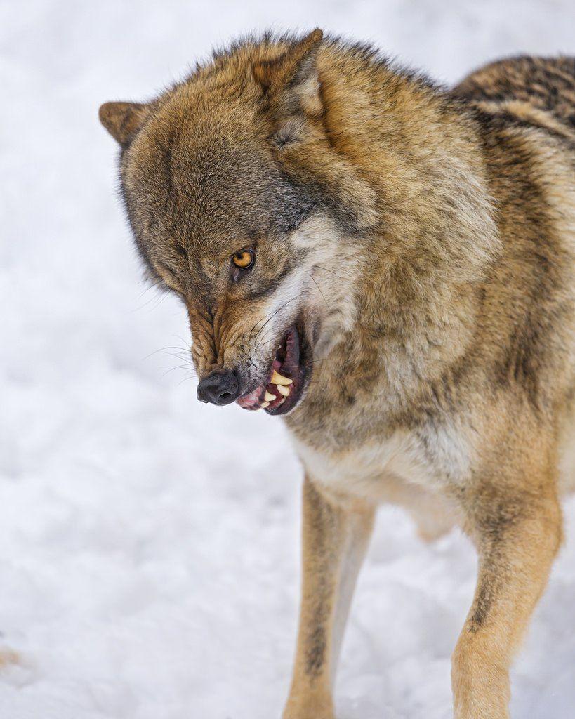 Top 10 Most Dangerous Legal Exotic Pets