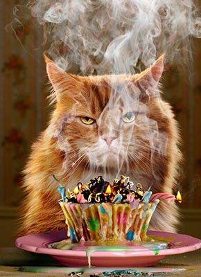1ce918bd5a89cd6fb3a3e857b3a34c68 birthday cupcake funny birthday card greeting card by avanti press