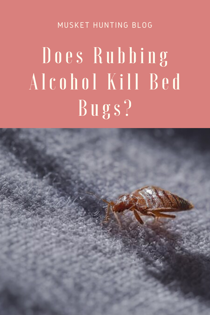 Does Rubbing Alcohol Kill Bed Bugs? (With images) Kill