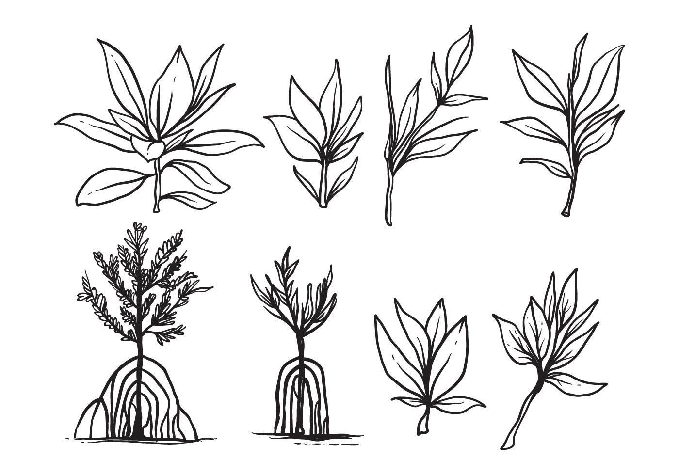 Free Hand Drawn Mangrove Vector