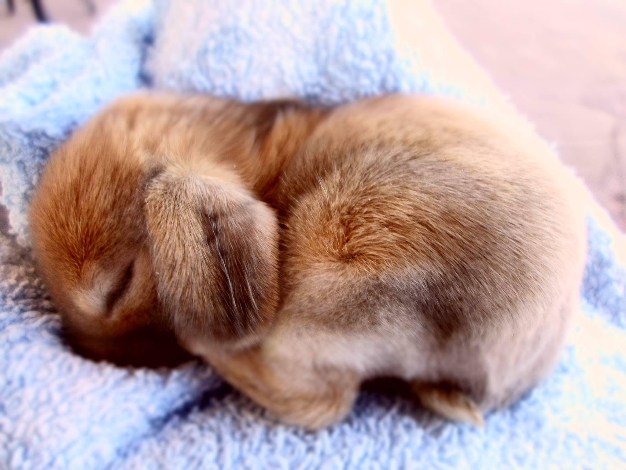 Cutest little bunny ever! | Super adorable! | Pinterest ...