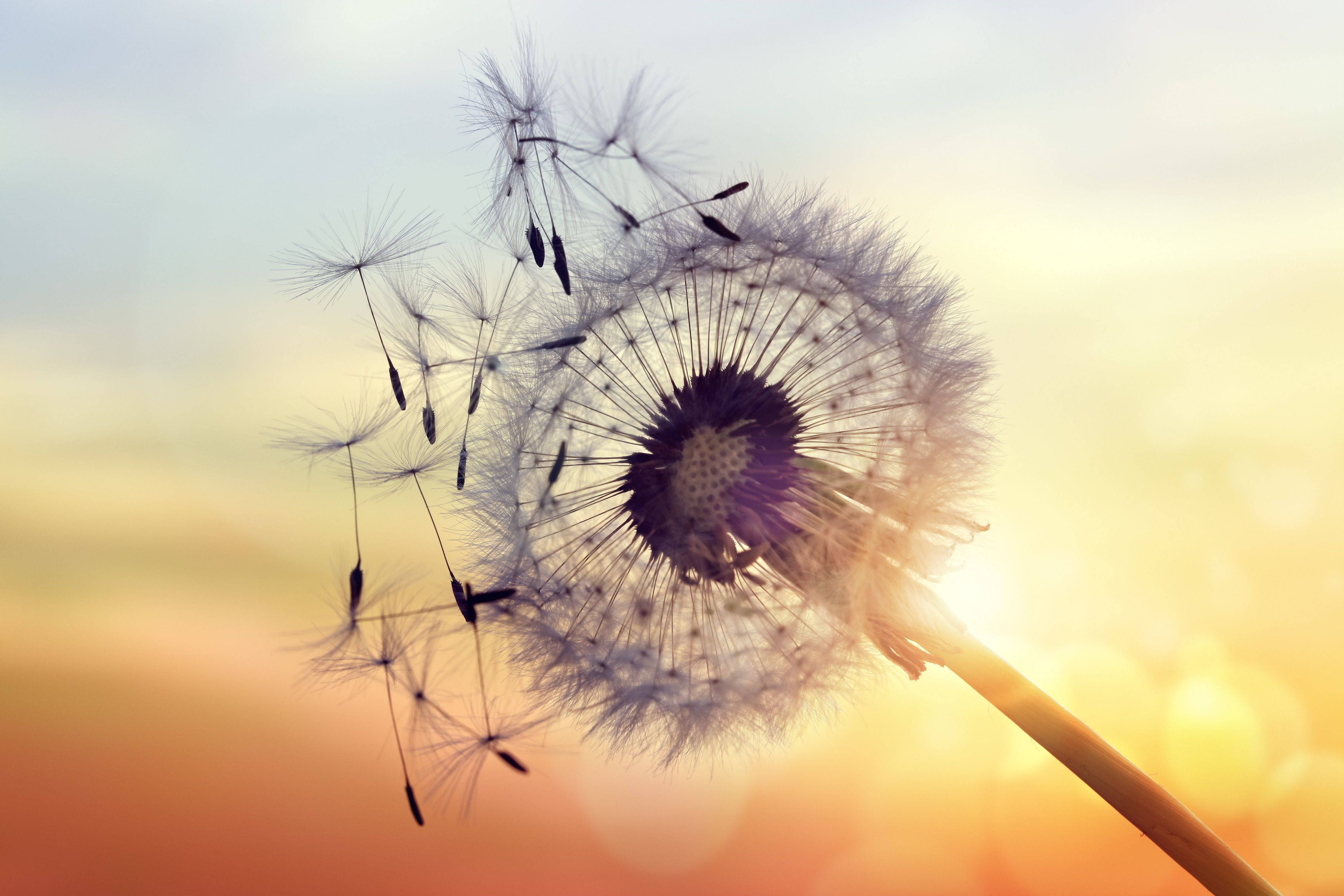 Allergy To Food Plants Pets And More Ask Your Genes Askyourgenes Dnatest Genomics Health Wellness Allergy Dandelion Dandelion Flower Relaxing Music