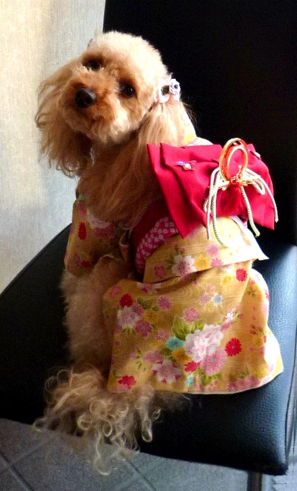 Japanese Kimono Dog Japanese Dogs Dog Costumes Dog Wear