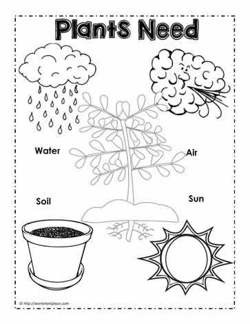 Plants Need Poster Spring Math Activities Math Activities Preschool Plant Lessons Plants worksheets for kindergarten