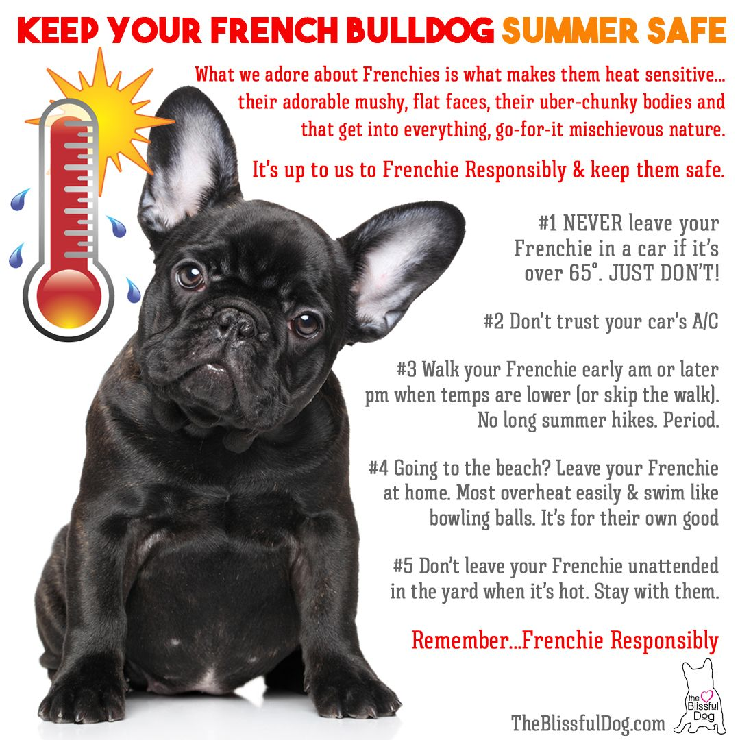 A Few Tips To Keep Your French Bulldog Safe This Summer