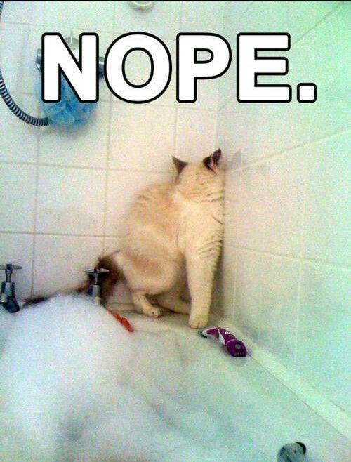 I Already Said I Don T Want To Bath No Means No Funny Meme Jokes Clean Funny Pictures Funny Animals Cute Animals