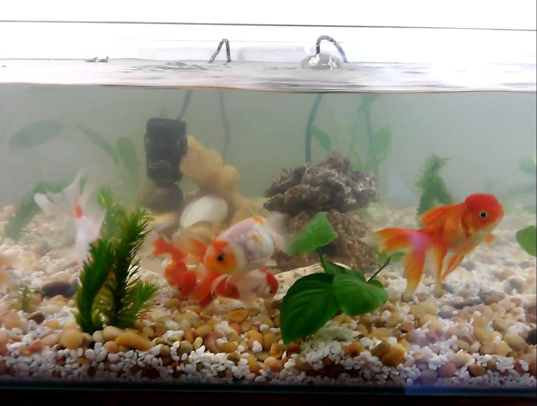 Goldfish Aquarium Natural Indoor Pond Tank Goldfish Aquarium Aquarium Goldfish