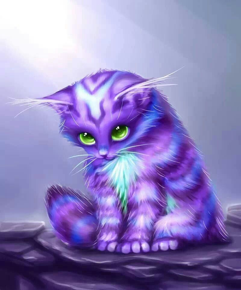 purple cat animals and pets pinte
