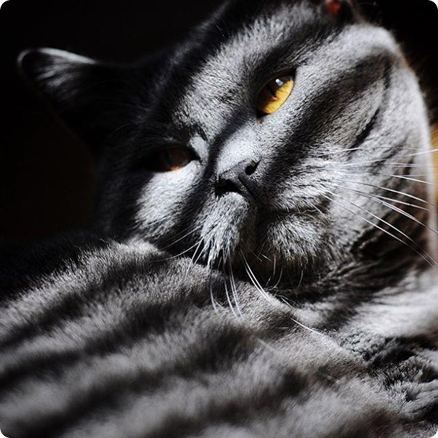 Le Plus Mignon Des Bagnards Chat Chartreux Photo Chien Chat