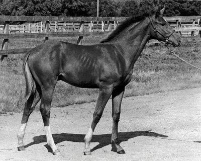 The legendary and incomparable Secretariat as a foal.