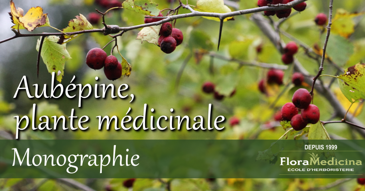 ménopause et plantes médicinales