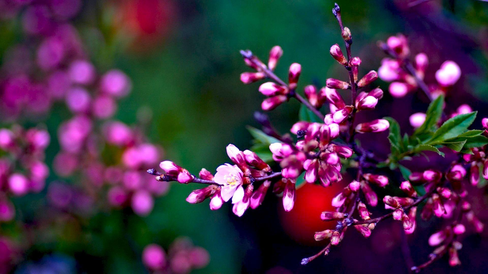 Beautiful Flowers 19201080 Hd Wallpaper Spring Flowers