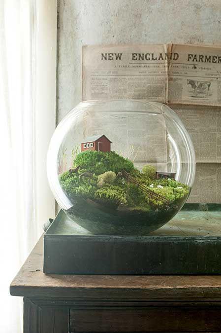 terrarium scenes terrarium ferme et plantes. Black Bedroom Furniture Sets. Home Design Ideas