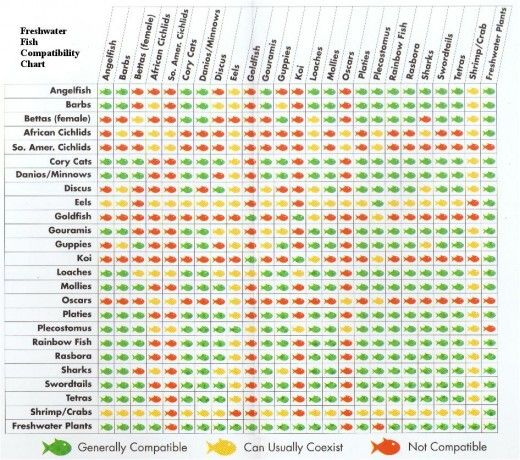 freshwater-fish-compatibility-chart | Freshwater aquarium fish