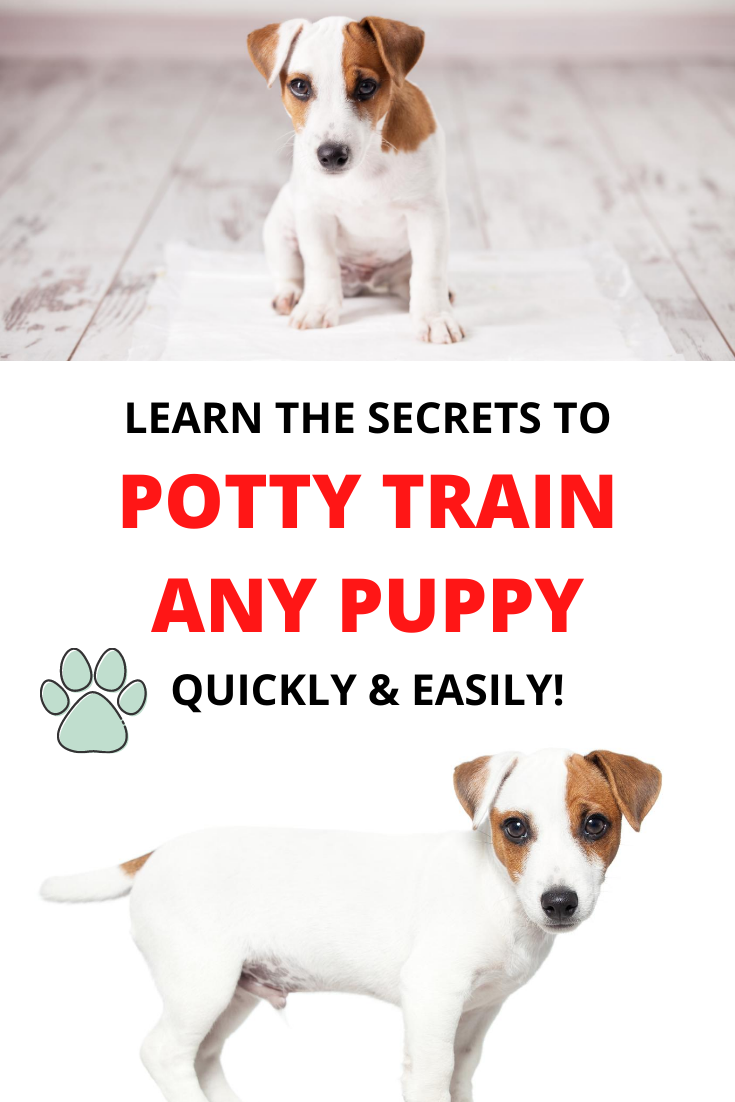 25 Nail Art Designs For Spring That Aren T Tacky Anna Elizabeth In 2020 Potty Training Puppy Training Your Puppy Puppies