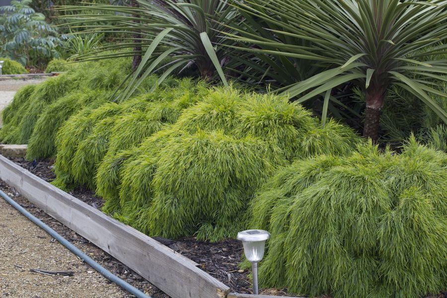 Pin On Border Plants