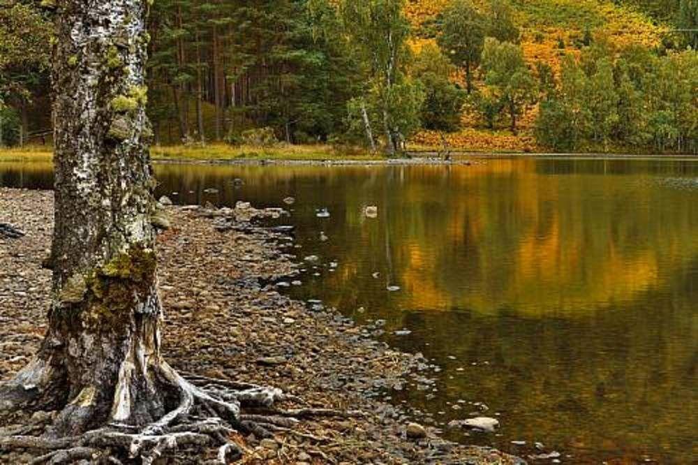 Parque Nacional de Cairngorms. Escocia.