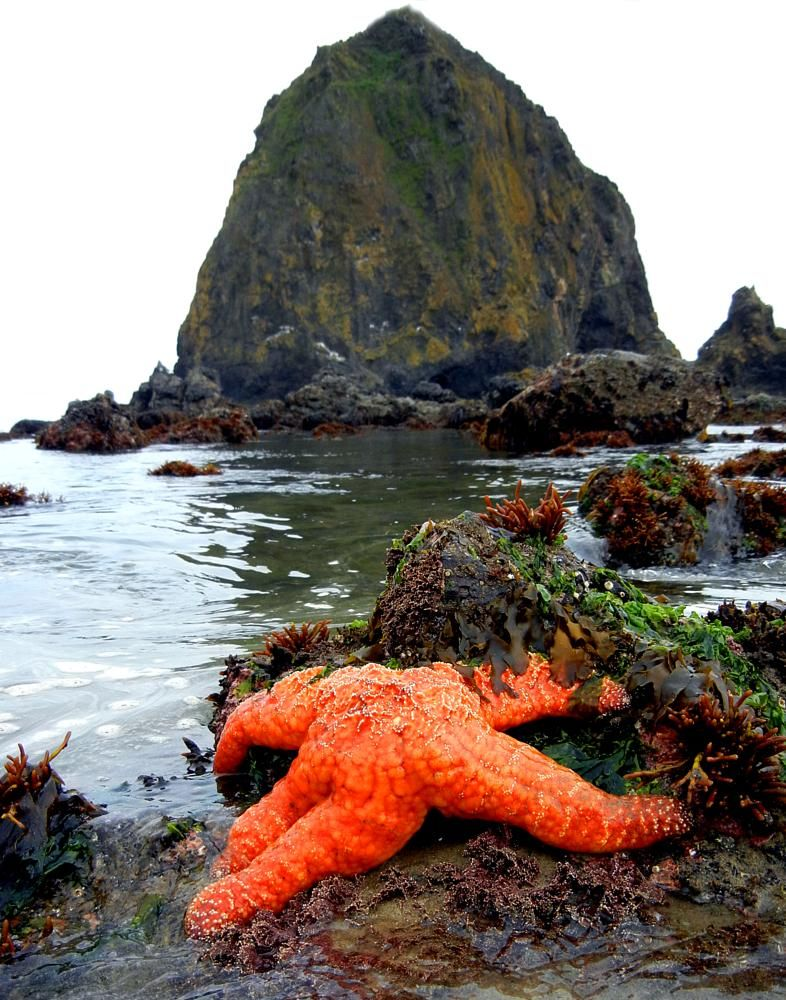 Starfish low tide by annlynnphotography