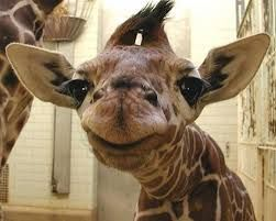 animal smiles - Google Search