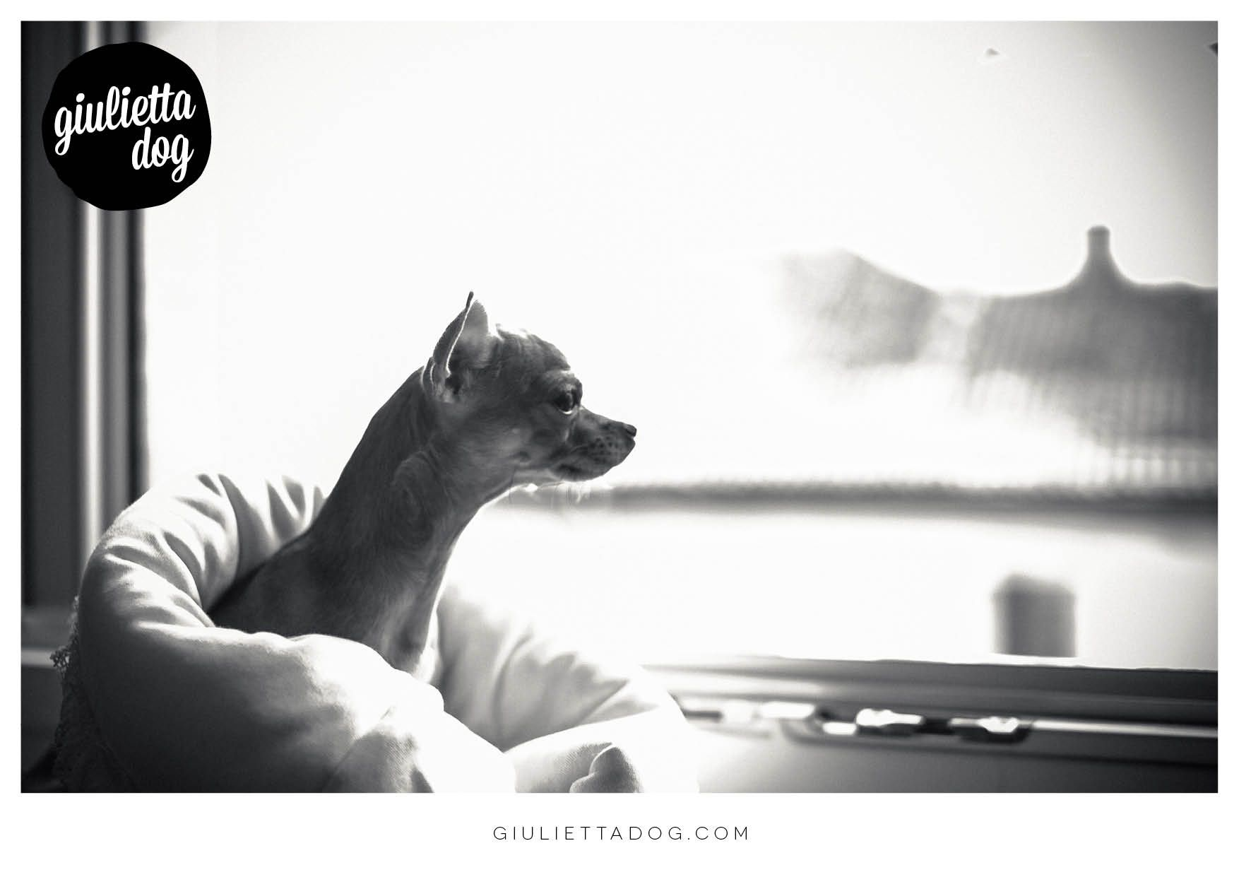Relax before lunch♥ #goodmorning #blackandwhite #chihuahualovers #overview #window #style #glam
