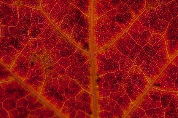 Herfstbladeren op glas