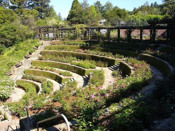 Terraced Garden Berkeley Rose Garden Ca Rose Garden Landscape Organic Gardening Garden