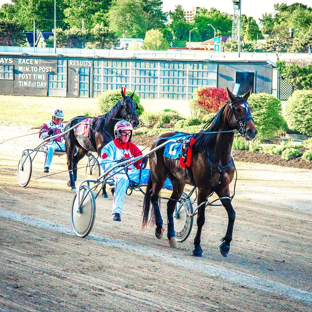 Pin by Vanessa on Harness racing (With images) Harness