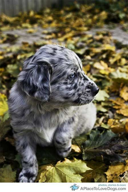 Puppies Animals Dog Breeds
